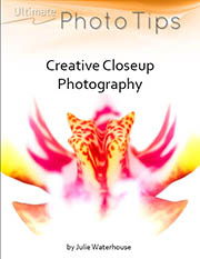 close up photography