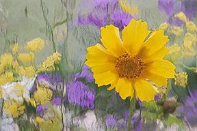 flowers through waterglass